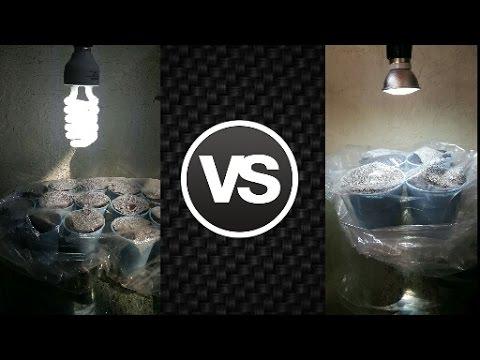 Pruebas Parte vs Investigación Plantas 3 Crecimiento LED y Eficaz de Económica Luz CFL y uiXZPOkT