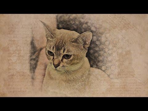 Вопрос: Какие породы кошек имеют табби окрас?