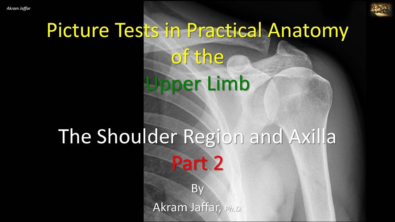 Picture tests in anatomy shoulder region and axilla 2 - YouTube