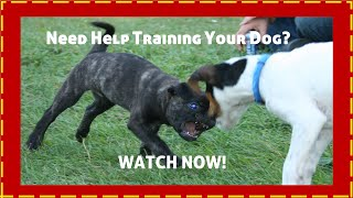 Chicago Pet Trainer Get Affordable Video Advertising For Your Business-  888-638-0015
