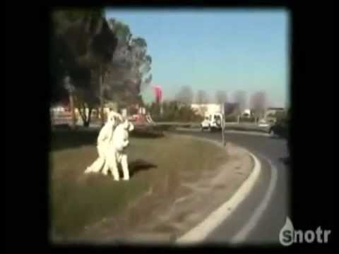 risunki-ebutsya-na-doroge-video-devushki
