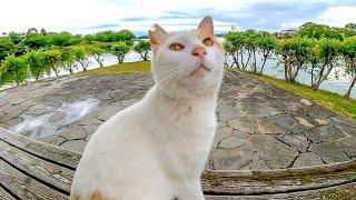 公園の野良猫がモフられに駆寄ってきた。そしていつもの東屋へ向かった