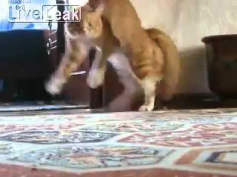 Самый смешной кот в ютубе