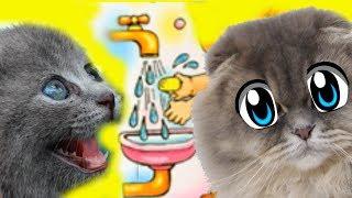 ПОЧЕМУ коты умываются? Кошка Мурка и Матильда