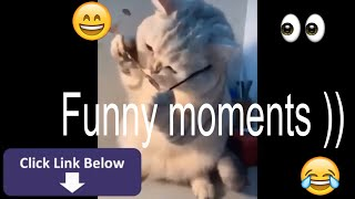 Funny animals! Cute Pets And Funny Animals ! Funny to tears!!