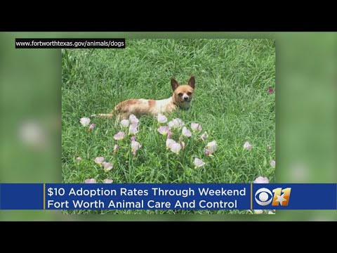 $10 Dog And Cat Adoptions In Fort Worth - YouTube