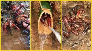 Nông Dân Trung Quốc Bắt Tôm, Cua, Ốc, Cá Tại Đồng Ruộng, Sông Suối, Núi Đồi P1 🐌🐌 Catch Crab Fish