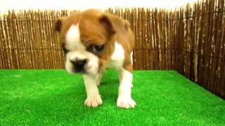 詳細はhttp://www.pets-hop.com/にてご覧になれます。