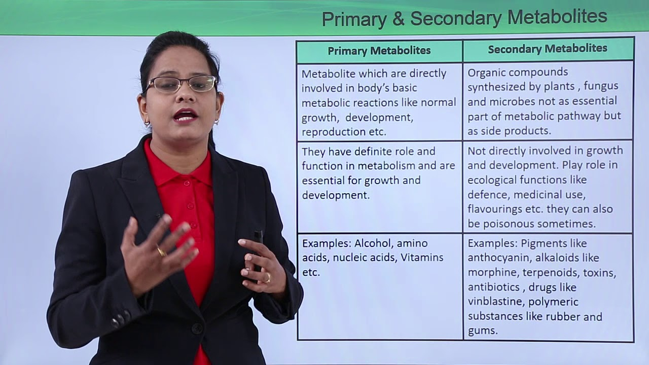 Primary and secondary metabolites - YouTube