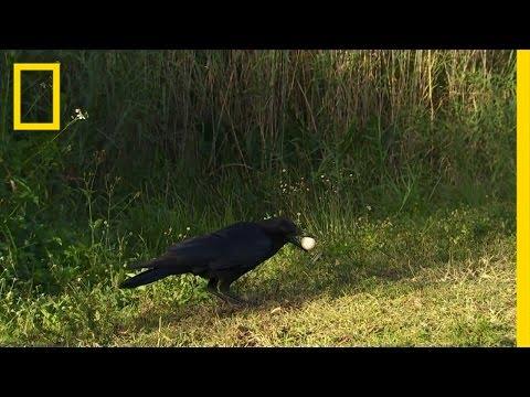 Everglades Egg Bandit | America's National Parks