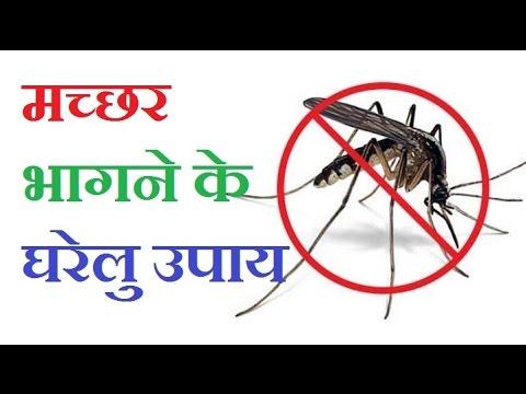 मच्छर भागने के घरेलु उपाय   Machar Bhagane ke Aasan tarika