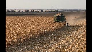 Уборка кукурузы - подвожу итоги