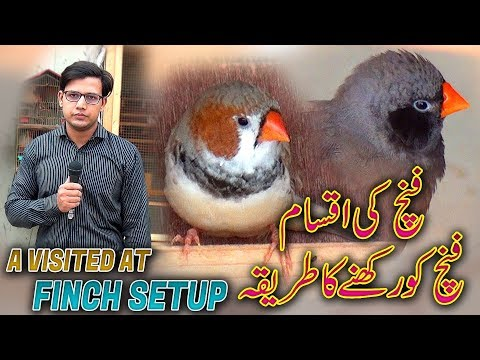 Visited at  Setup of Finch's with care & Tips (Jamshed Asmi Informative Channel) In Urdu/Hindi