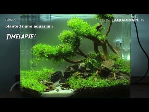 Setting up planted nano aquarium - timelapse