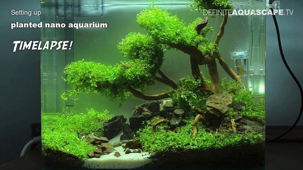 Setting Up Planted Nano Aquarium Timelapse Youtube