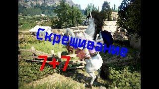 blackDesert(БДО) Скрещивание лошадей 7 ранга/ Как получить лошадь 8 ранга?