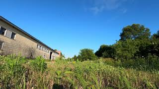 GSST Moments 3 - Barn Swallows
