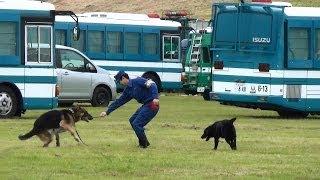 訓練前のハンドラーと警察犬のスキンシップです。 和やかな雰囲気が良か...