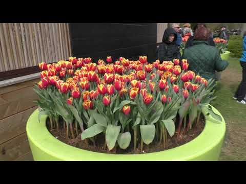 Королевский парк цветов-