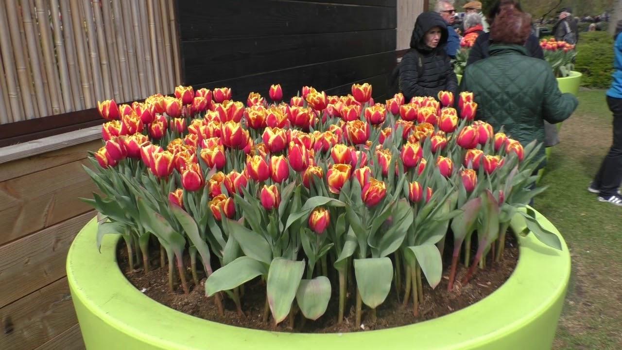 Королевский парк тюльпанов Кёкенхоф- это нужно обязательно увидеть!!!