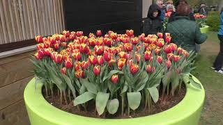 Королевский парк цветов- это нужно обязательно увидеть!!!