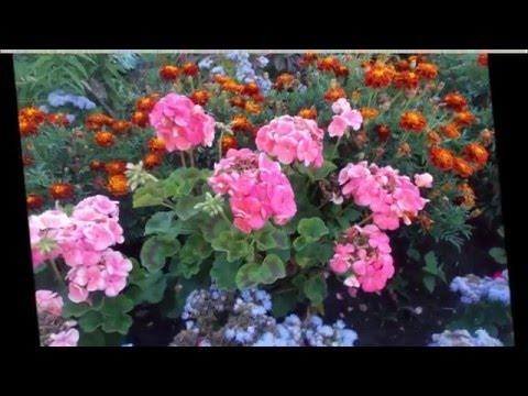 Цветники и садовые композиции на даче своими руками