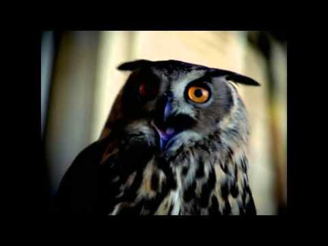 Outkast - Msn HD 1080p [Точка Zрения - Мисс Джексон] Русская озвучка клипа