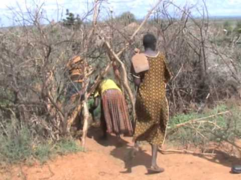Trachoma is healed with herbs