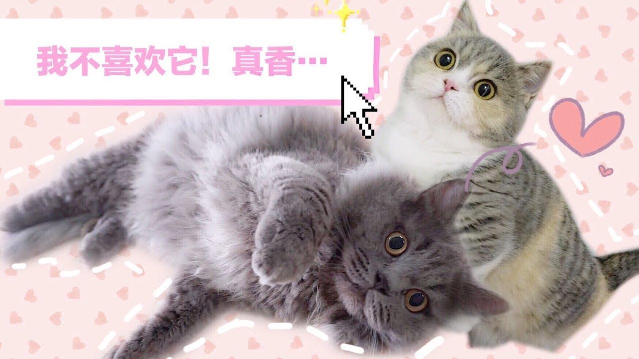 小奶貓的來源:貓爸與貓媽媽的愛情故事! - YouTube