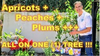 A-to-Z GRAFTING TUTORIAL on 'Approach Grafting' | Before & Afters  | Prunus & Apple & Fig
