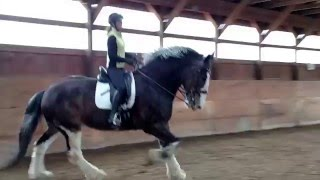 Clydesdale Dressage with Crusader