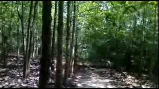 บริเวณวัดป่าสุคโต