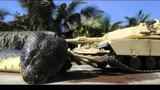 Самая большая змея в мире! РАЗОБЛАЧЕНИЕ И ФОТО МОНТАЖ.