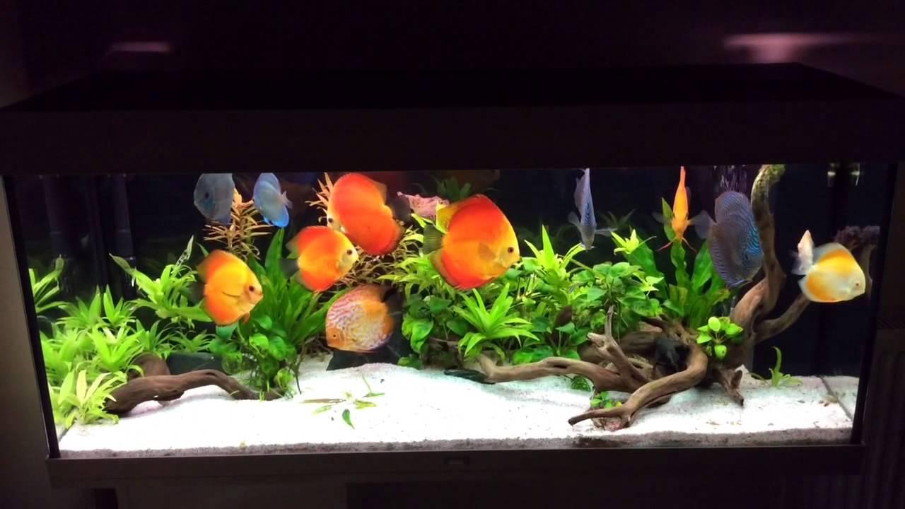 Juwel rio 240 aquarium fish tank - Planted Discus Tank Juwel Rio 240l