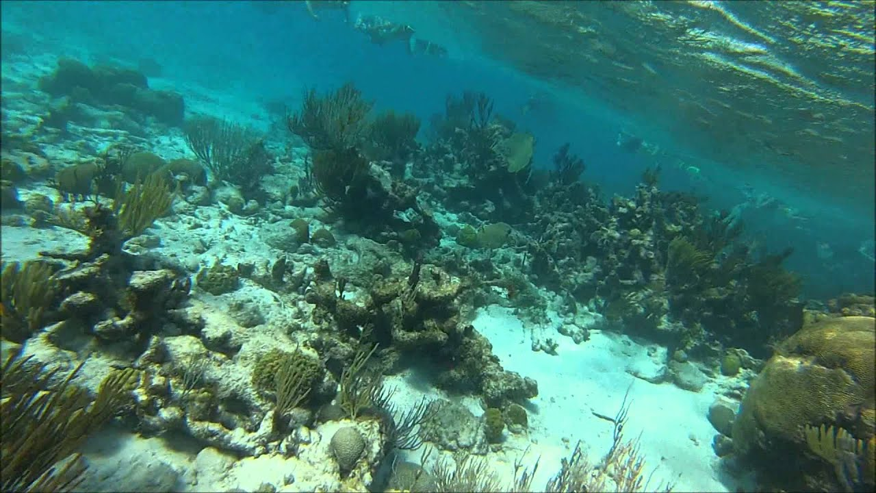 Best Diving In The Cayman Islands