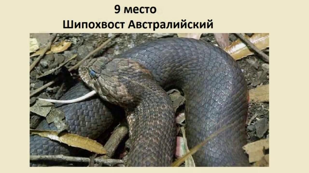 Самые опасные змеи мира!!! - YouTube