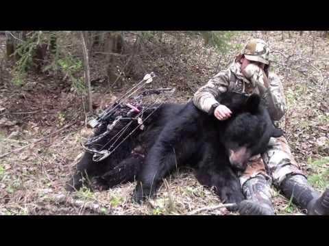 Huge Black Bear-Archery Hunt in Saskatchewan