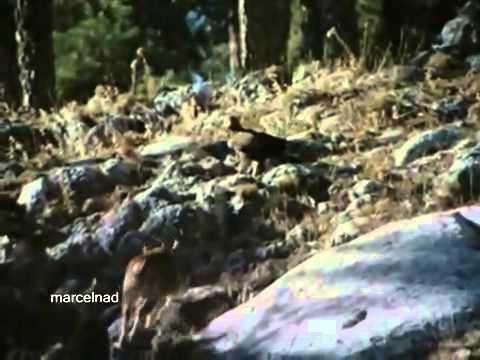 Các loài chim có cách săn mồi kỳ lạ, loai chim san moi  DAI BANG