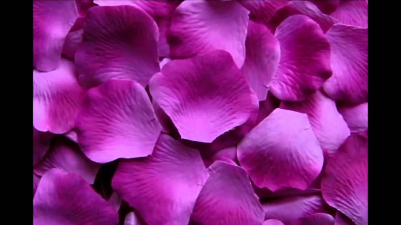 American floral network purple wedding silk rose petals usa youtube mightylinksfo