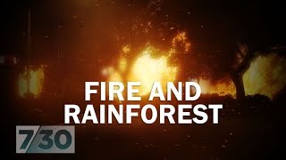 Australia's bushfire future where not even rainforests are safe | 7.30