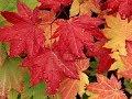 За окошком осень Outside The Window The Autumn mp3