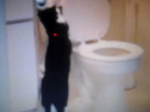 cat flushing a toilet song