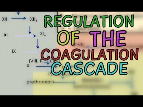 Regulation of the Coagulation Cascade - Protease Inhibitors - Fibrinolytic System
