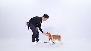 #TheDreamSeekers【爱就请担起责任!前暴雪员工辞职教铲屎官养狗:没有培训的主人对狗狗是一种折磨】 thumbnail