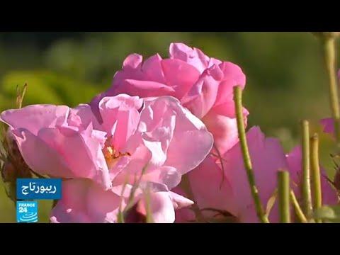 صناعة العطور في مدينة غراس الفرنسية ضمن التراث العالمي لليونسكو  - نشر قبل 2 ساعة