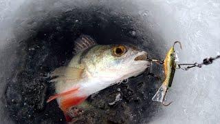 Зимняя рыбалка. Уроки ловли на балансиры от профи - часть 2. Ловля окуня на балансиры.