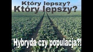 #170- Rzepak Hybrydowy czy populacja ? Przegląd plantacji przed zimą cz. 2