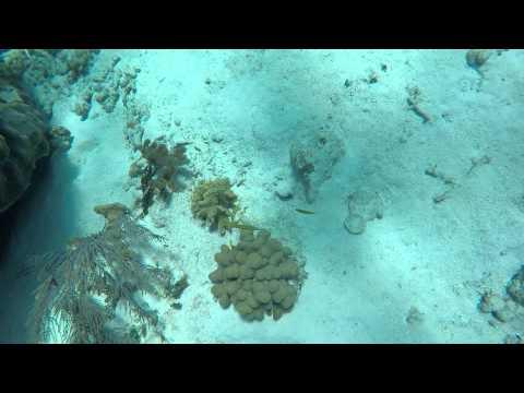 Grand Cayman Lobster