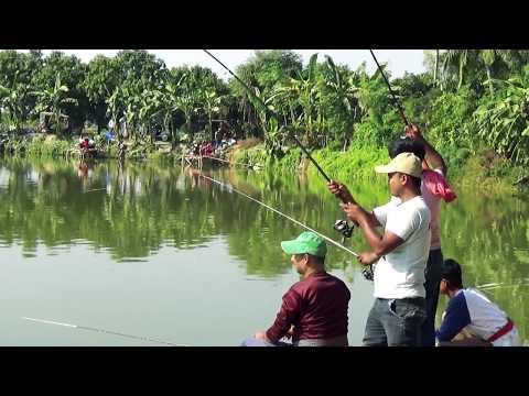 Bighead Carp Fish Hunting By Rokey (10kg)