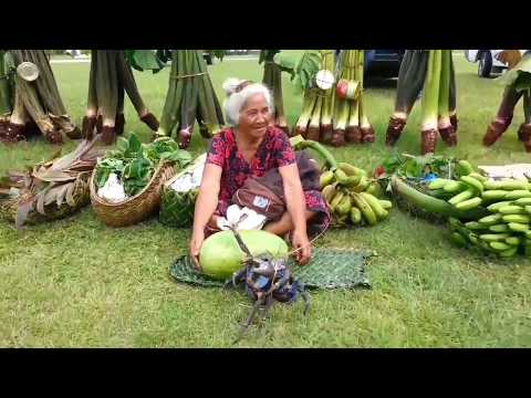 Hakupu-Atua Fakaue Tau 2017 (Thanksgiving) Talo Niue @NiueanSnake